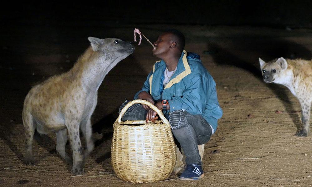 Hyänen in Harar