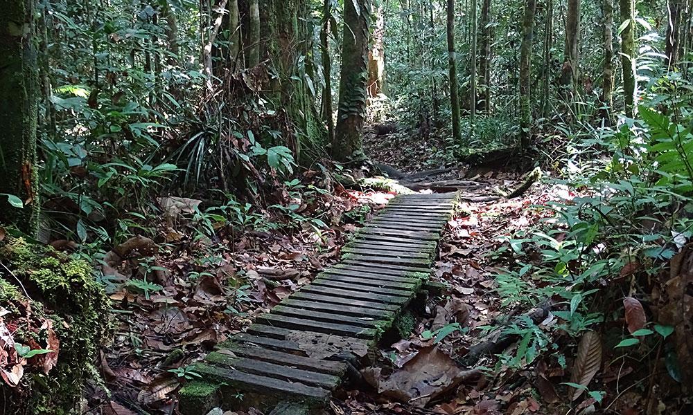Ein Weg durch den Dschungel im Kubah Nationalpark