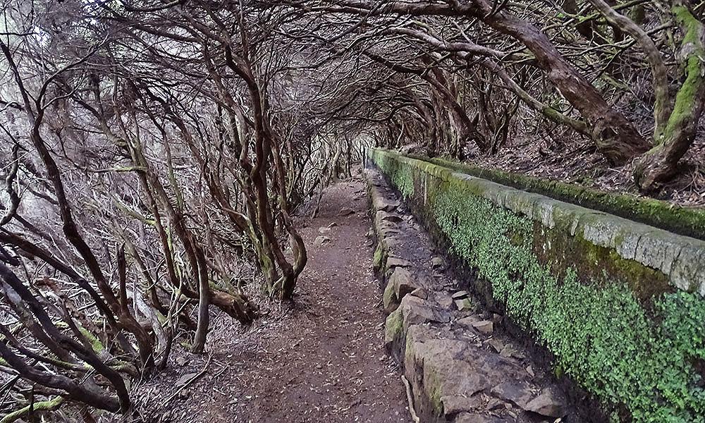 Vom Wind gebogene Bäume