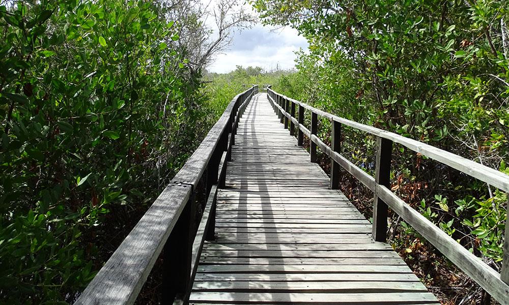 Holzbrücke in Ecuador