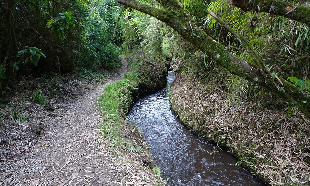 Wanderweg am kleinen Fluss entlang in Ecuador