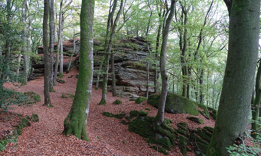 Felsen zwischen Bäumen