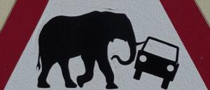 Elefant stößt Auto um