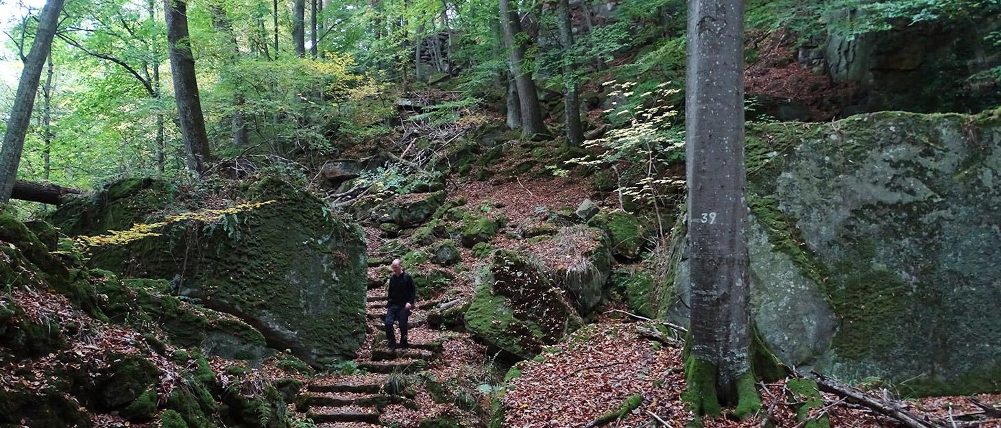 Mann wandert im Wald im Deutsch-Luxemburgischen Naturpark