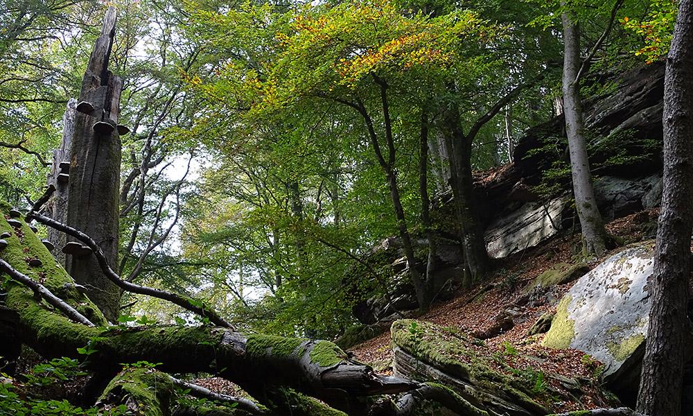 Felsenlandschaft im Wald