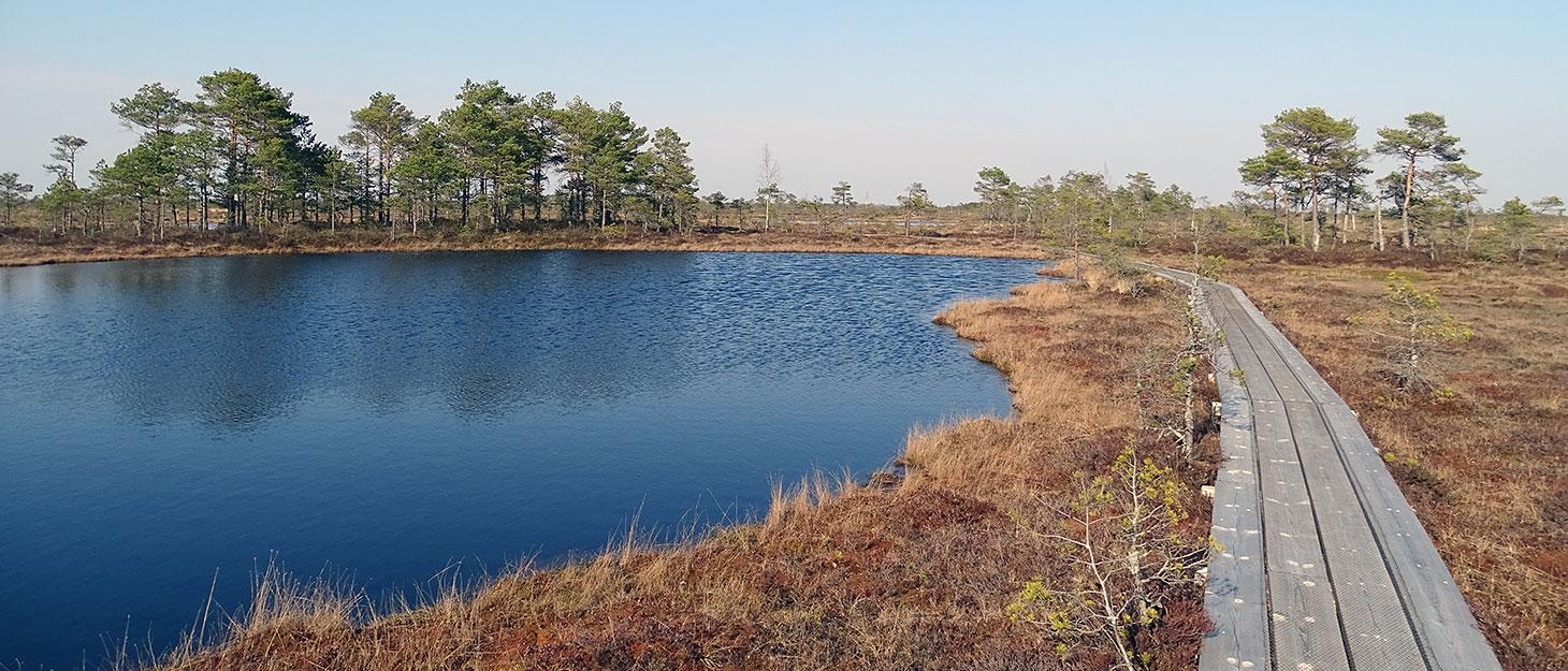 Holzbohlenweg am See im Moor von Estland