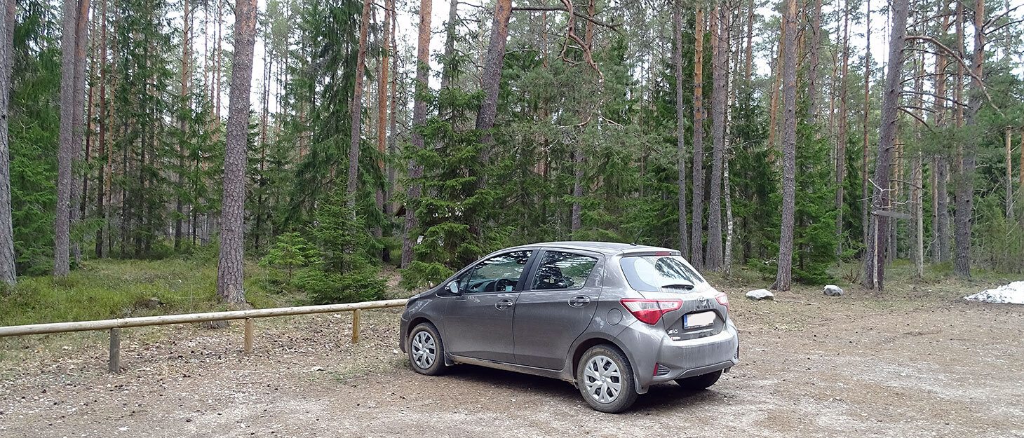 Mietwagen in Estland am Wald