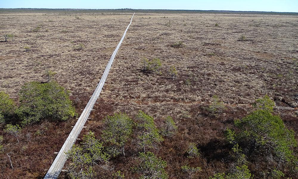 Langer Holzweg durchs Moor