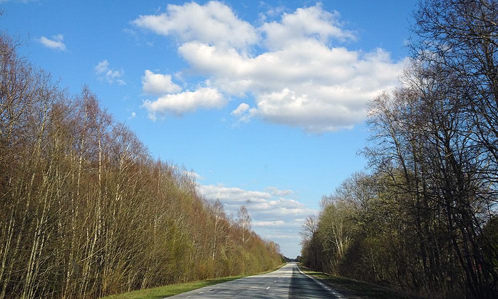 Im Wald Autofahren in Estland