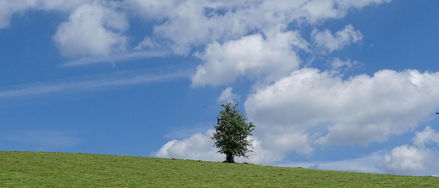 Baum auf Wiese vor blauem Himmel