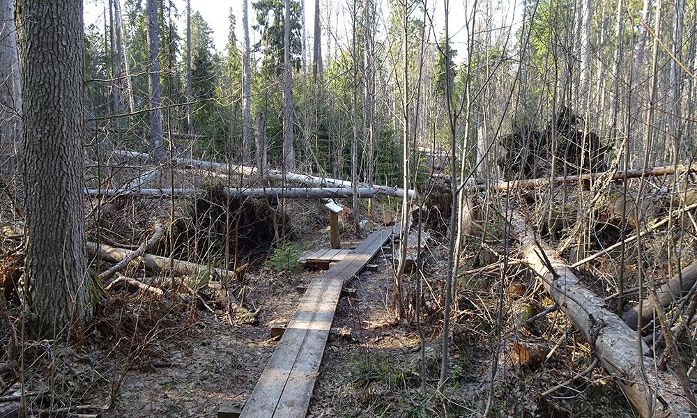 Holzweg durch umgefallene Bäume