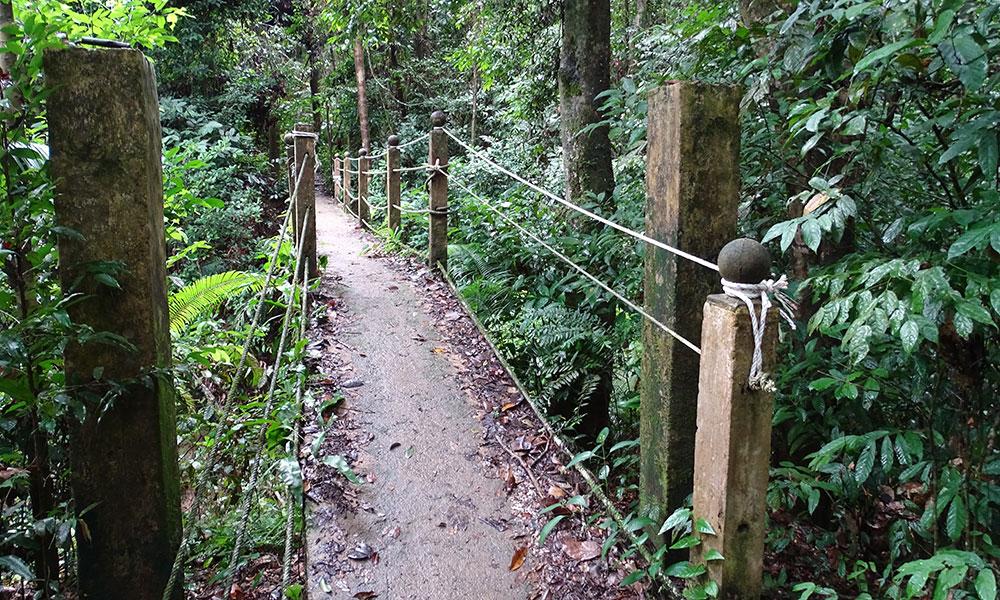 Weg im Regenwald