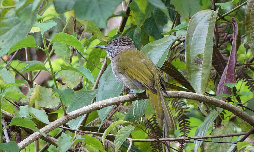 Gelber Vogel im grünen Blattwerk