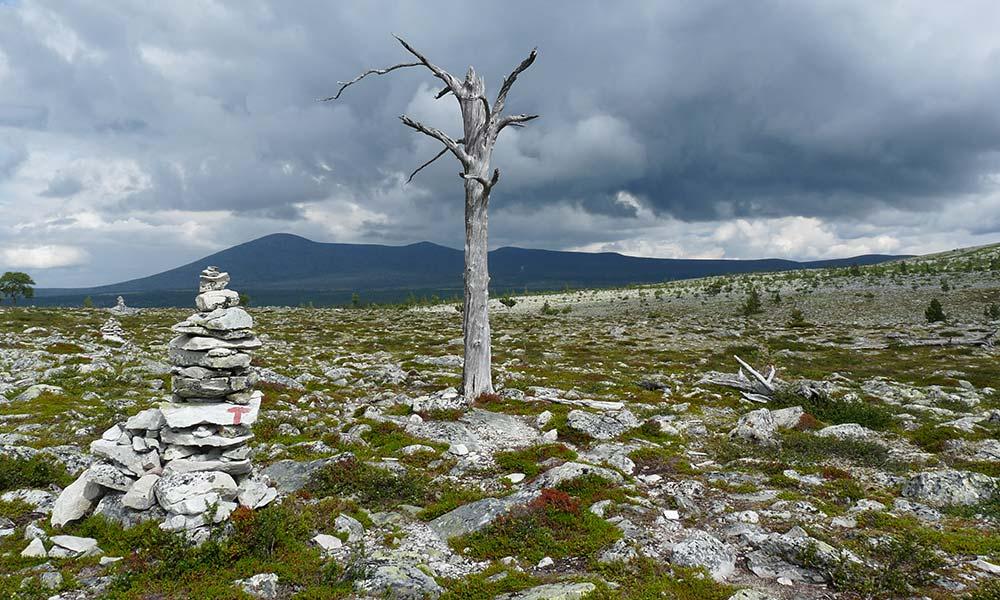 Baum auf Steinfeld in Norwegen