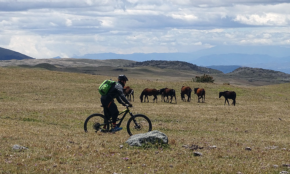 Mountainbiker vor Pferden