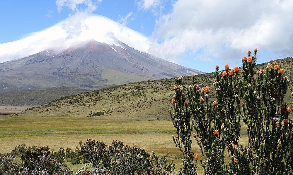 Berg mit Blumen davor