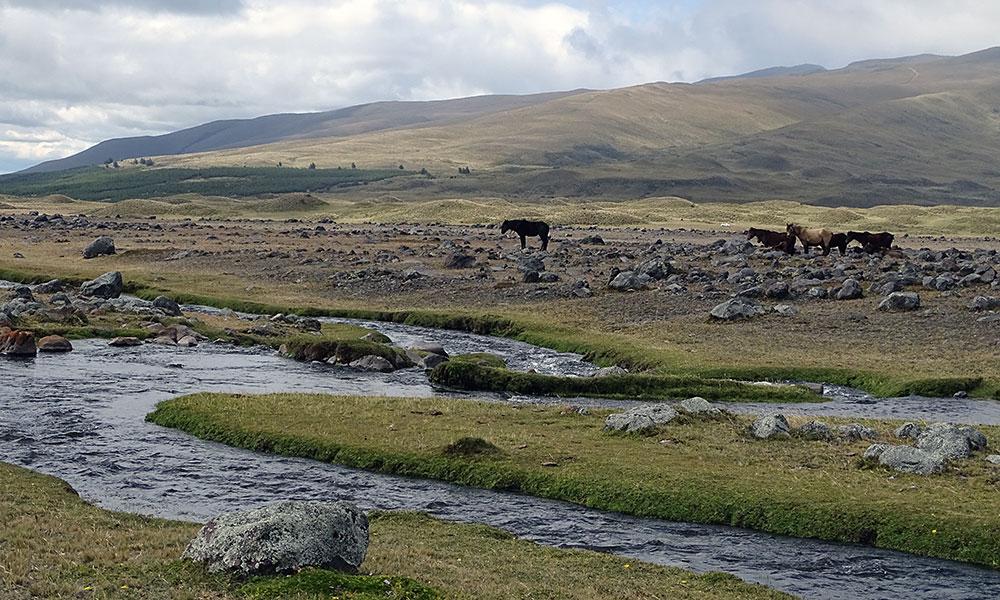 Pferde am Fluss
