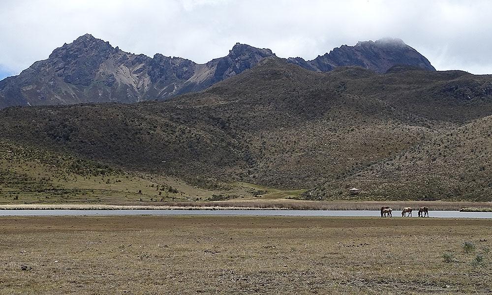 Wildpferde grasen vor Bergen