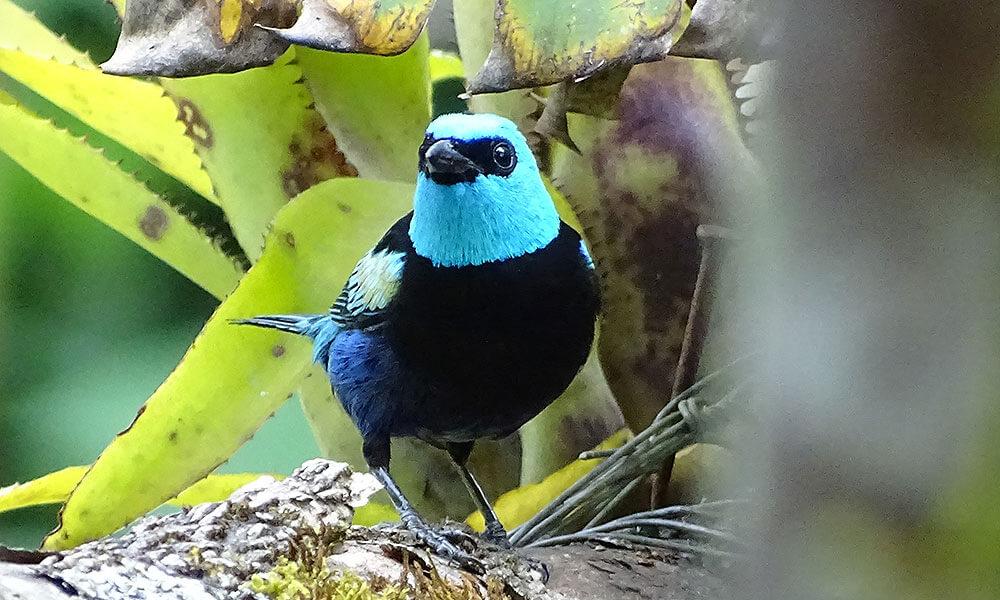 Blau-schwarzer Vogel