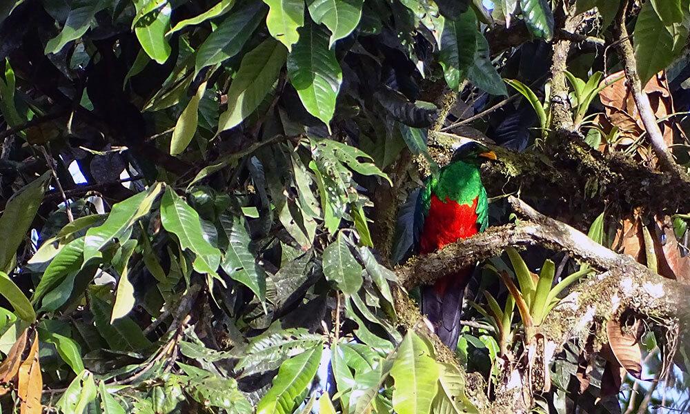 rot-grüner Vogel
