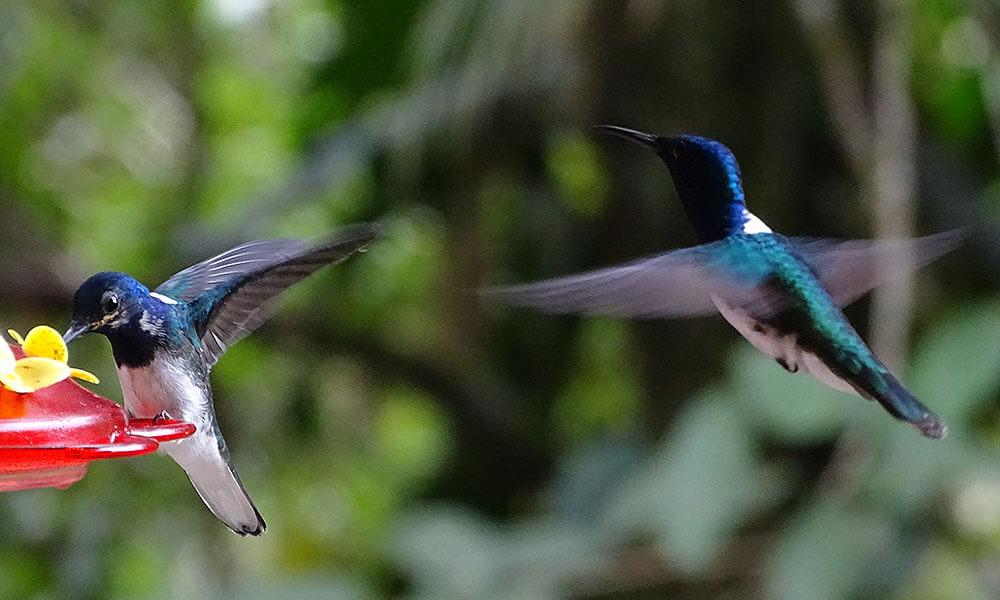 Zwei Kolibris an der Futterstation