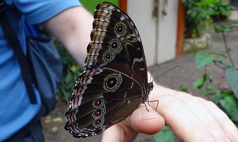 Schmetterling auf einer Hand