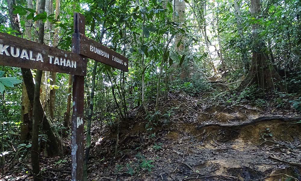 Schilder im Regenwald