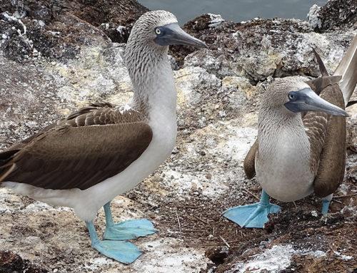 Galapagos: Ausflüge auf Isabela