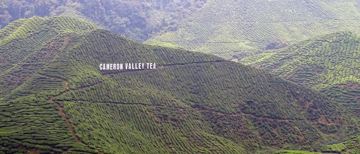 Teefelder in den Cameron Highlands