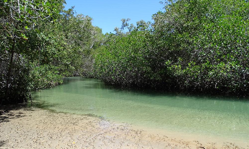 Blauer Meeresarm, umringt von Mangrovenbäumen