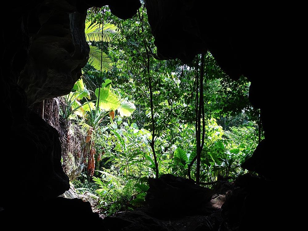 Dschungel durch Höhleneingang