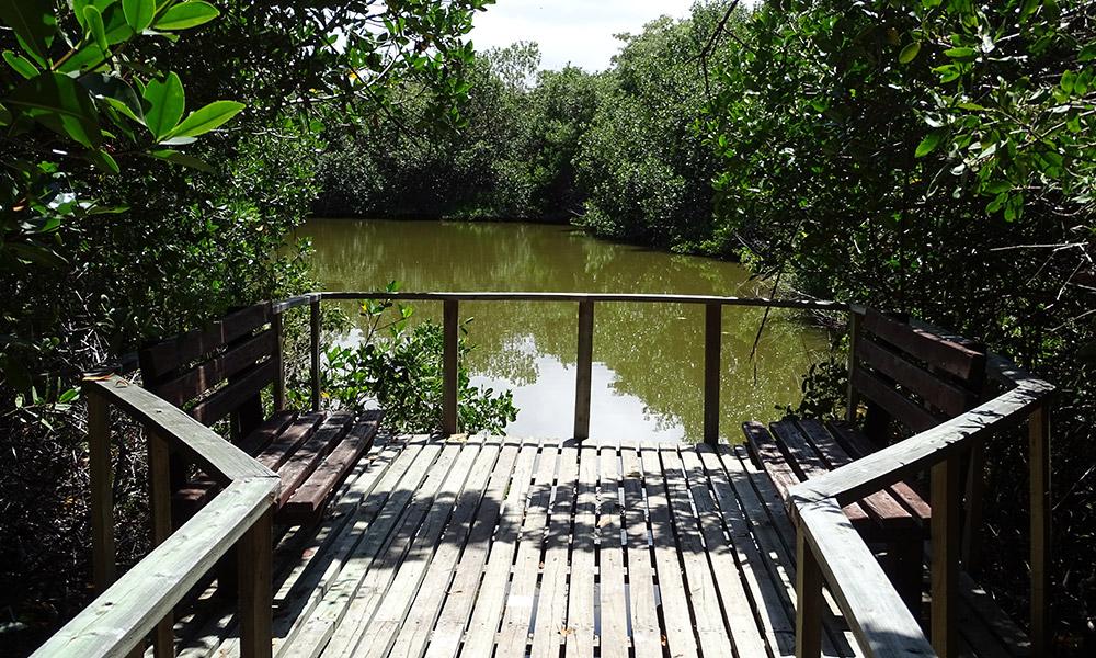 Holzbänke am Teich