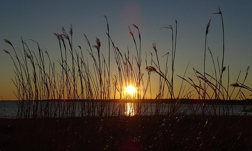 Sonnenuntergang hinter dem Schilf