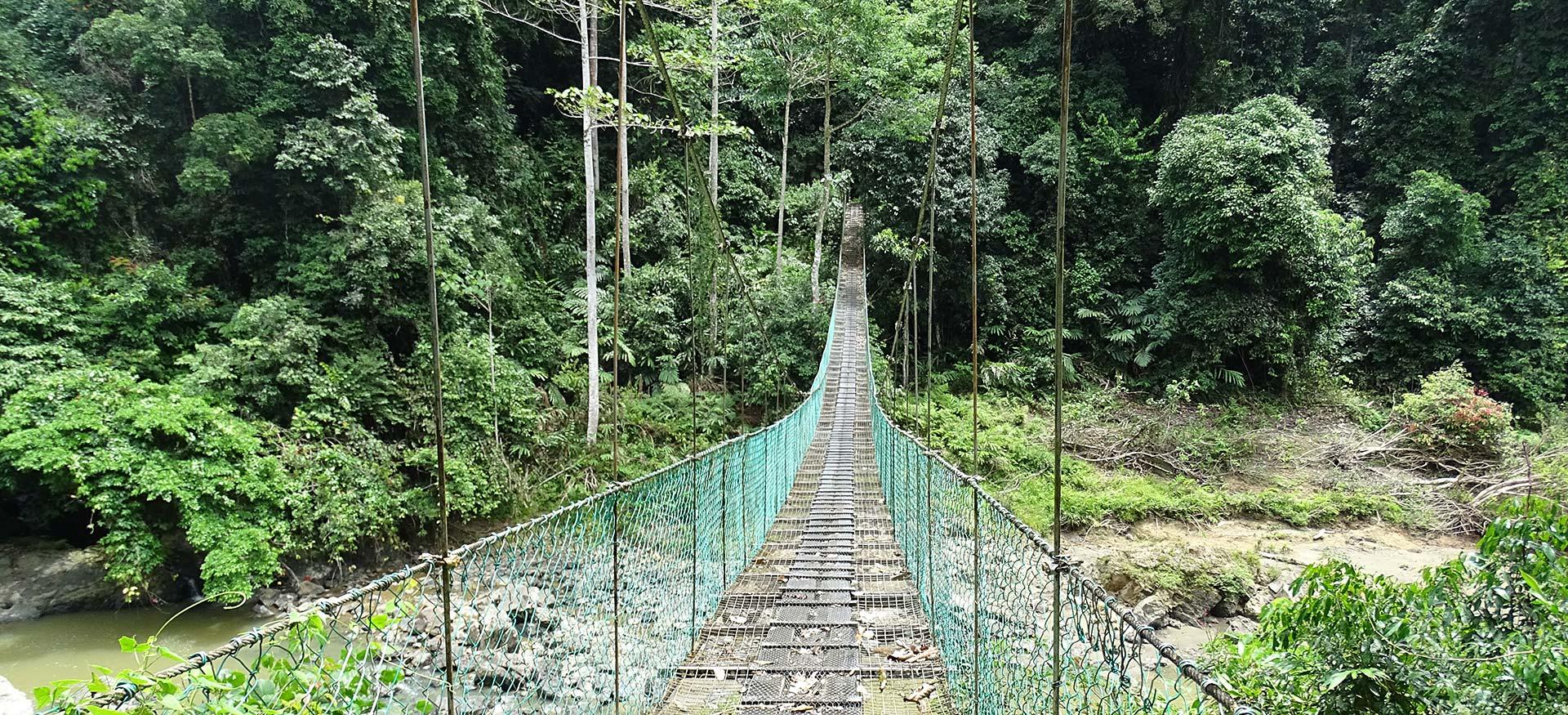 Brücke im Regenwald