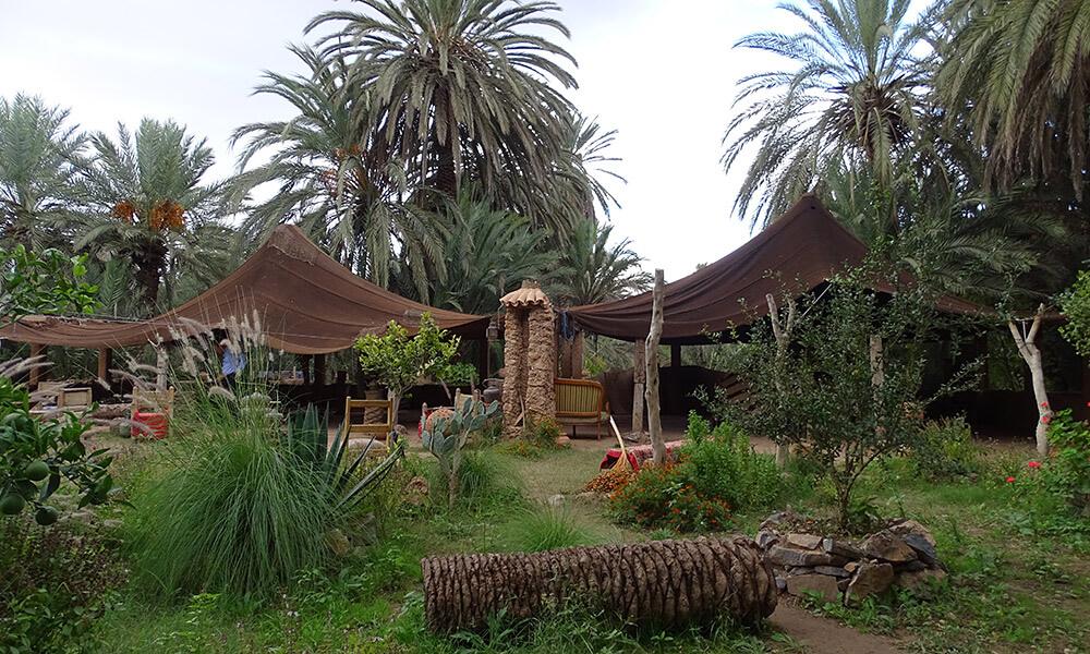 Garten mit Zelt unter Palmen