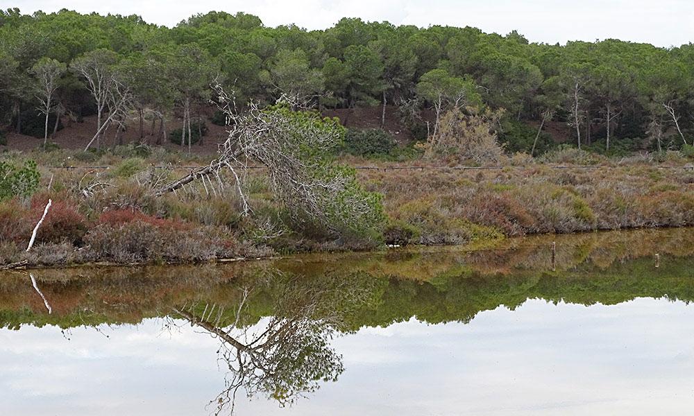 Baum spiegelt sich im Wasser eine Lagune