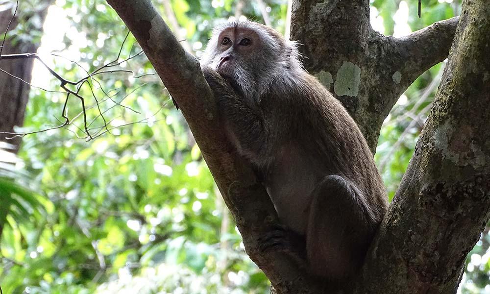 Affe liegt im Baum