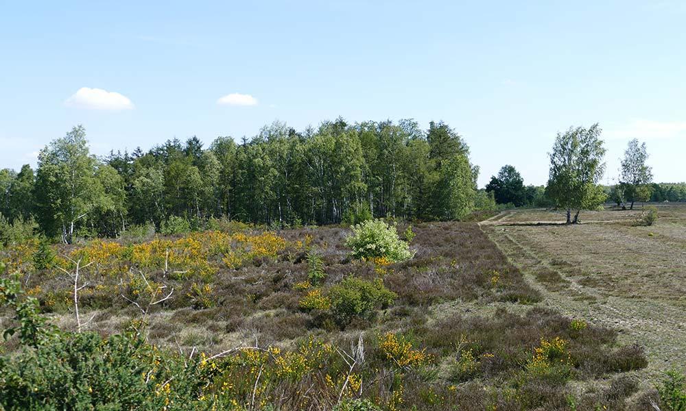 Blick in die Heidelandschaft