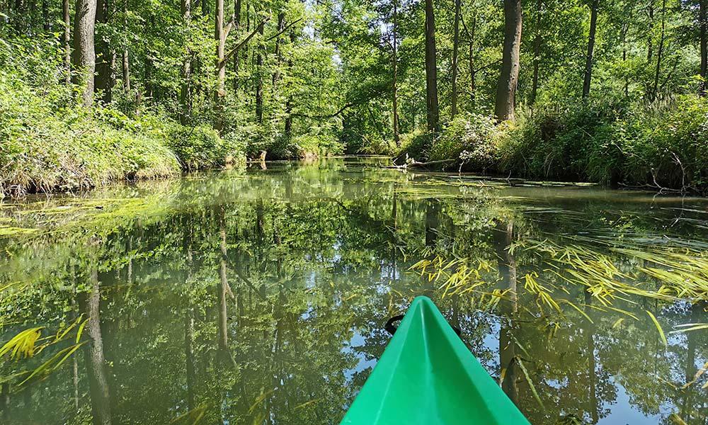 Kanu auf dem Fluss durch einen Wald