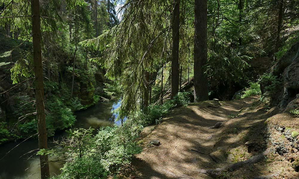 Wanderweg durch Wald über dem Fluss
