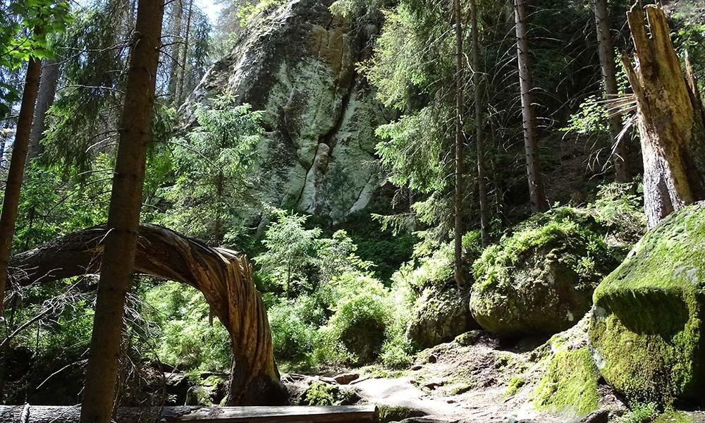 Verschlungener Baumstamm im Wald