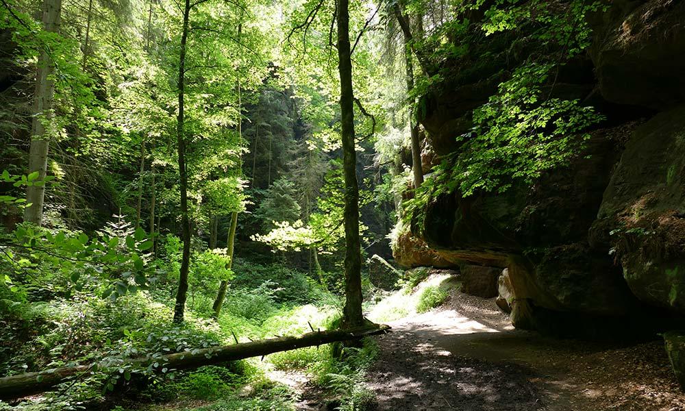 Felsen im dichten Wald