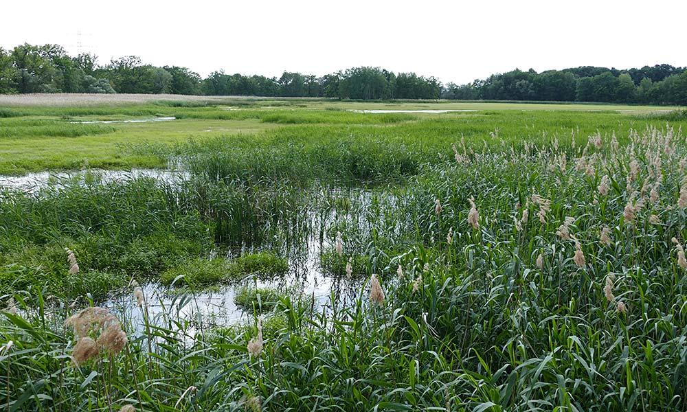 Blick über Teich mit Schilf