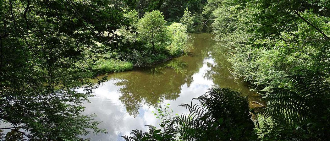Fluss Große Nister im Westerwald