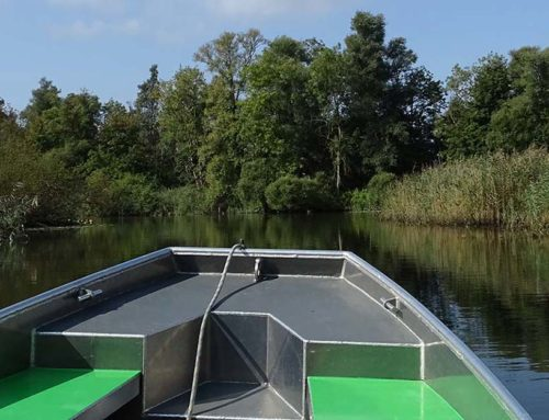 Per Boot durch den Nationalpark De Biesbosch
