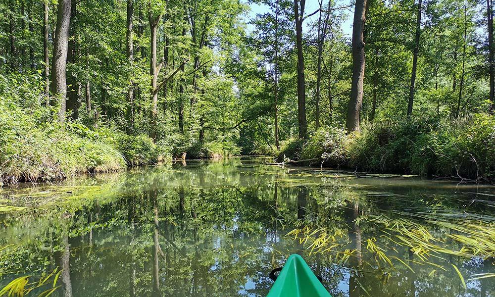 Kanu auf Fluss im Wald