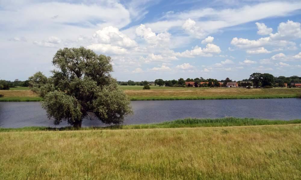 Baum an Fluss
