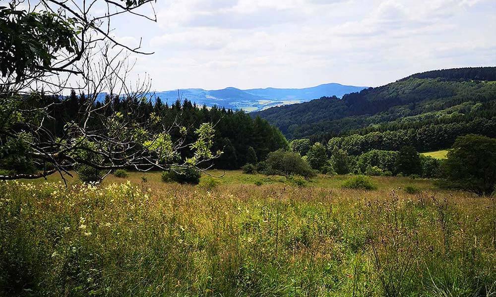 Blick über Wiese auf die Berge