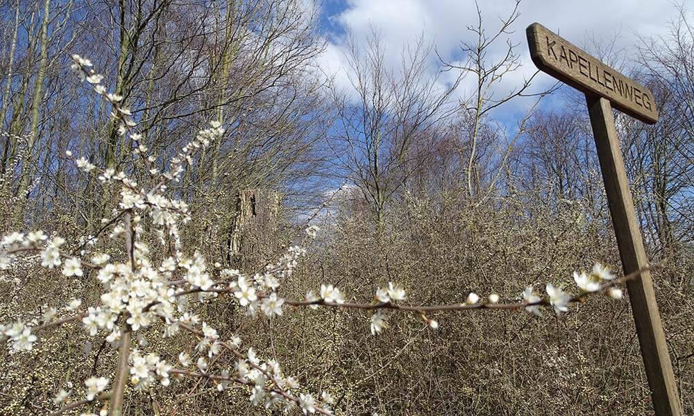 Blüten am Schild Kapellenweg