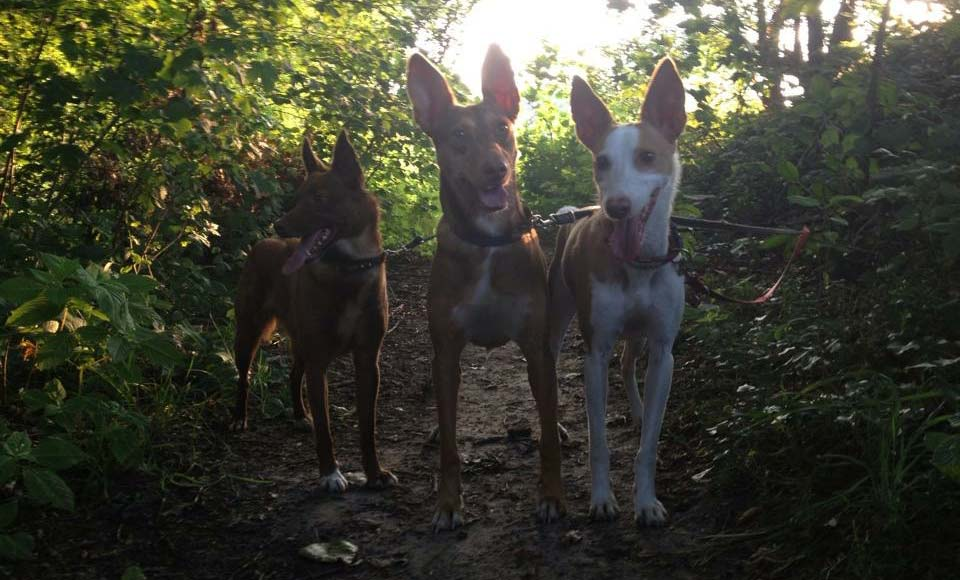 Drei Hunde im Grün
